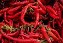 Pile of thin red chili peppers.