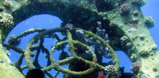 Corals on the Tamar artificial coral reef